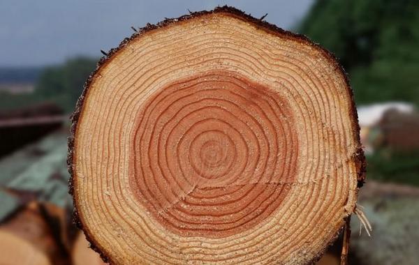 进驻电商 木材企业发展之路在何方?